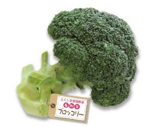 0404fukushima_h.jpg